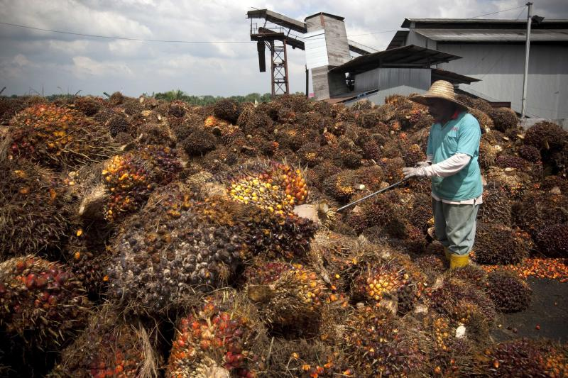 Palm Oil Forced Labor