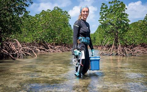 Studying resilience in coral at a mangrove off Port Douglas - Credit: Franck Gazzola/©Rolex