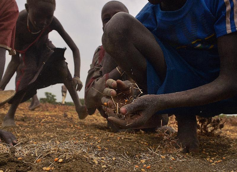 Children gather grain spilled from bags busted open following a food-drop on February 24, 2015 at a village in Nyal, Panyijar county, near the northern border with Sudan (AFP Photo/Tony Karumba)