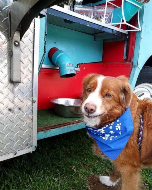 PHOTO: Seattle resident Quigley Anne waits patiently for a free treat to drop through the truck's 'treat tunnel.' (quigleyanne.the.toller)