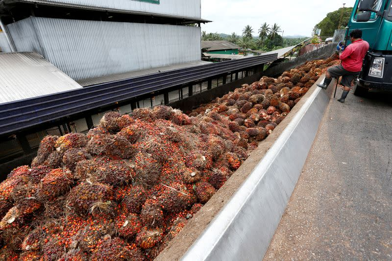 India palm import curbs to start Malaysia, Indonesia price war - association