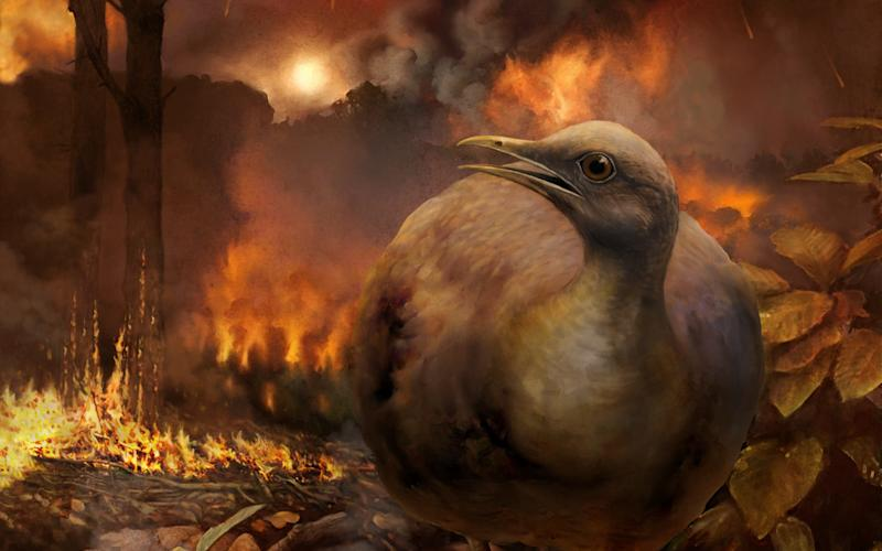 Scientists told about the birds survived the asteroid impact