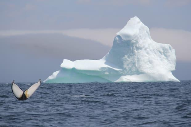 Whales and icebergs are among the popular draws for tourists to Newfoundland and Labrador.