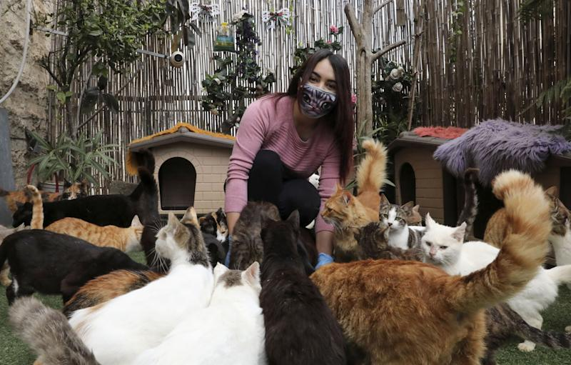 Palestinian Hiba Junaidi wearing protective gloves and mask amid the COVID-19 outbreak, feeds stray cats she cares for in her house's backyard which she had turned into a shelter, near the West Bank city of Hebron, on April 7, 2020. (Photo by HAZEM BADER / AFP) (Photo by HAZEM BADER/AFP via Getty Images)