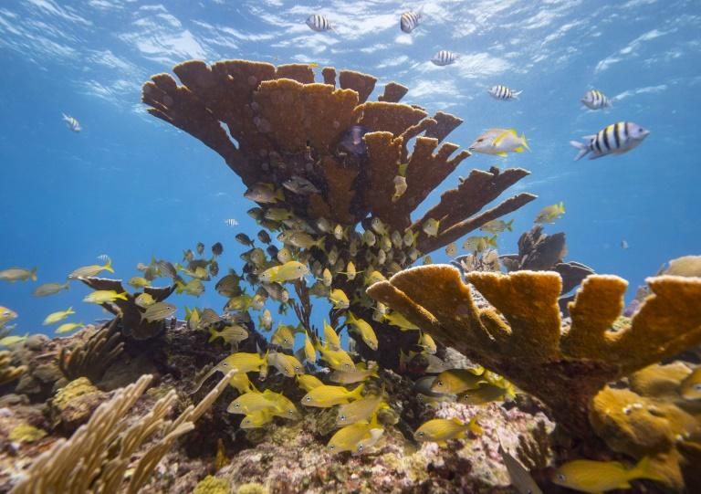 Reefs all over the world are being affected by the toxins in sunscreens (AFP Photo/DONALD MIRALLE)