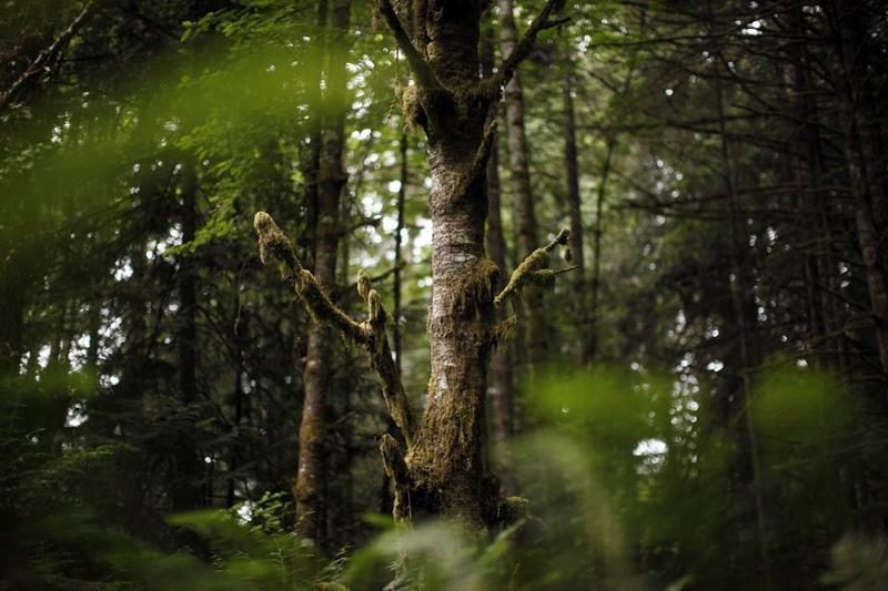B.C. moves to end divisive old-growth forest policies, protects nine areas