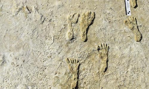 Human fossilized footprints at the White Sands national park in New Mexico