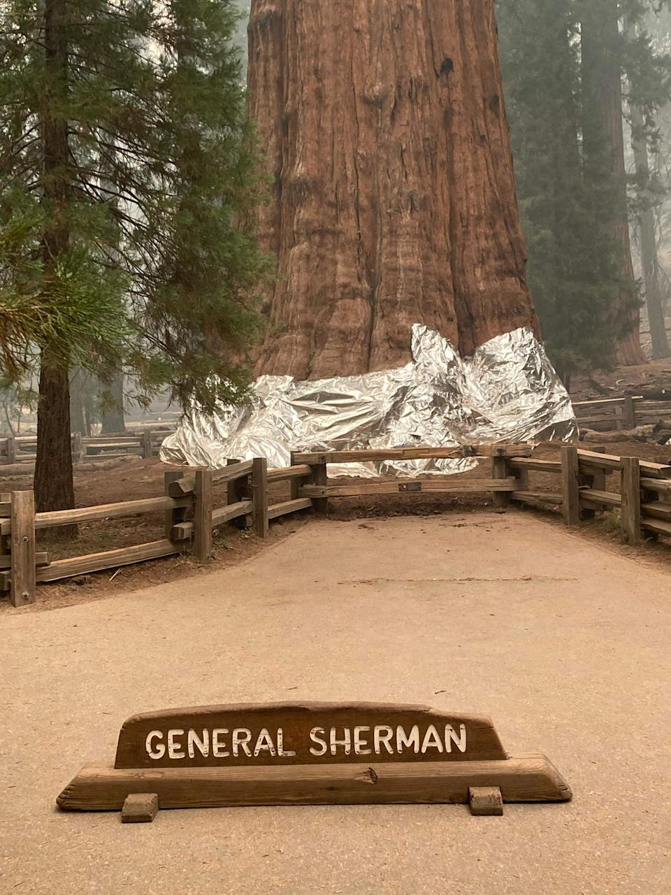 Lower portions of the giant Sequoia trees were wrapped in fire protective foil last week as the threat of wildfire intensified (NATIONAL PARK SERVICE/AFP via Getty Image)