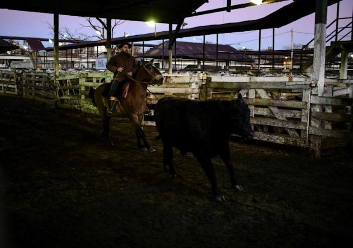 Gauchos chasing cattle at the Liniers Market, which will soon move outside Buenos Aires