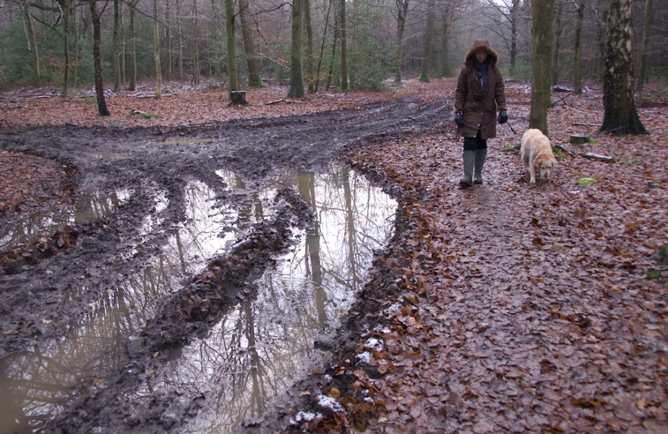<em>The disease is known to thrive in cold, wet soil (Rex/stock photo)</em>