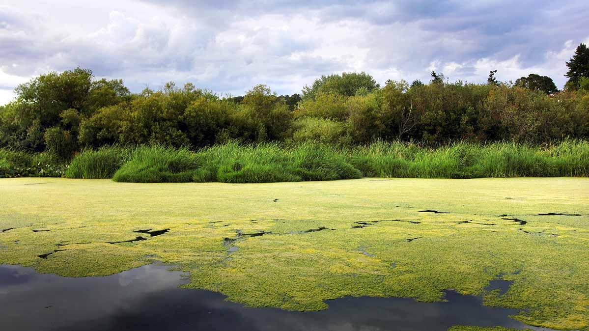How to Spot and Avoid Algal Blooms