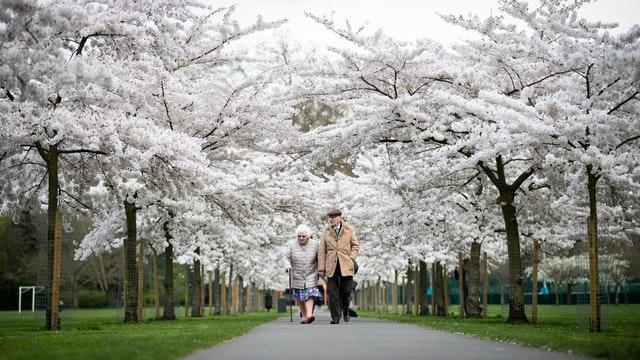 An elderly couple walk down a path lined with blossoms in Battersea Park, London