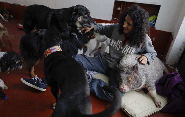 <p>Jair Luzan interacts with some of his pets as they relax in their temporary home in the aftermath of a 7.1-magnitude earthquake, in Mexico City, Friday, Sept. 22, 2017. (Photo: Natacha Pisarenko/AP) </p>