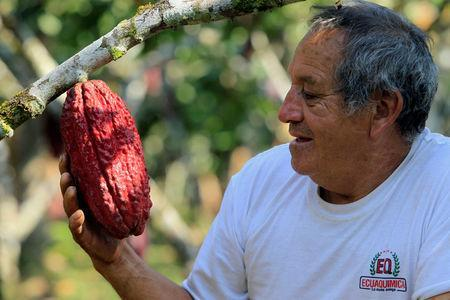 FILE PHOTO: An Ecuadorean farmer holds a cacao fruit in Las Naves, some 350 km (217 mi) southwest of Quito, September 26, 2010. REUTERS/Guillermo Granja/File Photo
