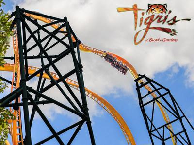 Get ready to take on Tigris® Florida's tallest launch coaster, opening at Busch Gardens® Tampa Bay spring 2019. Tigris features an exhilarating triple launch with forward and backward motion, catapulting riders through looping twists, daring drops, a 150-foot skyward surge, and an inverted heartline roll – all at more than 60 miles per hour.