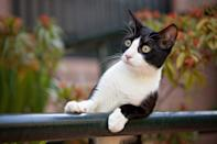 Black and white cat leaning on railing looking away from camera