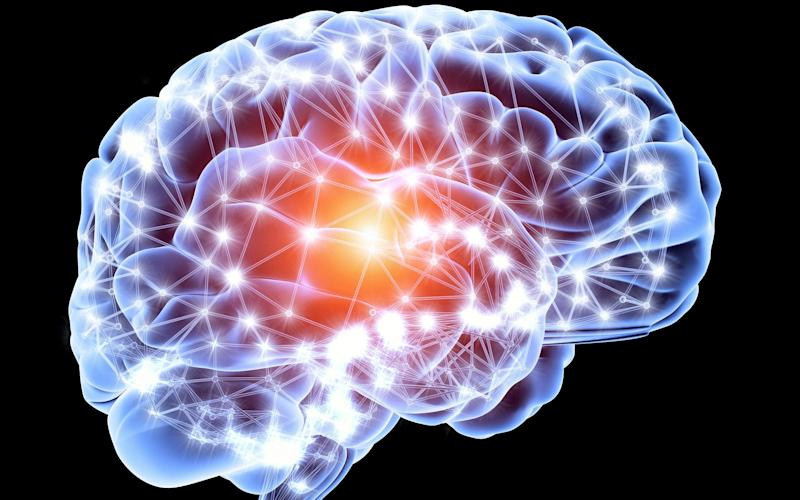 The human brain continues to grow new neurons until death, a new study shows - Getty Images Contributor