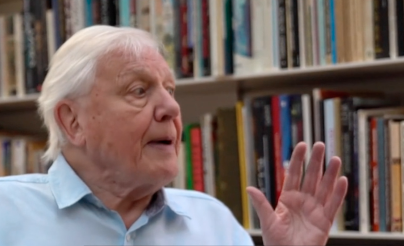 David Attenborough spoke with the BBC ahead of November's climate summit in Glasgow. Source: BBC