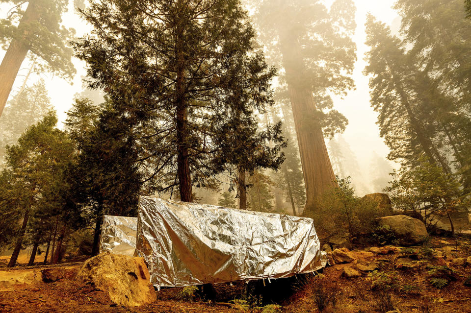 Fire-resistant wrap covers a bridge as the Windy Fire burns in the Trail of 100 Giants grove of Sequoia National Forest, Calif., on Sunday, Sept. 19, 2021. (AP Photo/Noah Berger)