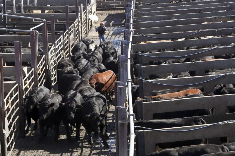 A herd of cattle are moved through the pens at the Cargill Beef Processing Plant in Schuyler, Nebraska October 10, 2013. REUTERS/Lane Hickenbottom (UNITED STATES - Tags: ANIMALS FOOD SOCIETY)