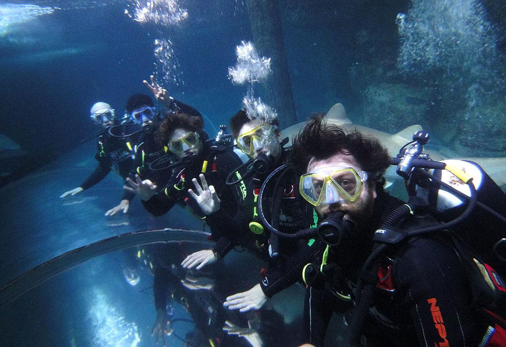 "Boy band The Wanted (minus member Nathan Sykes) stuck together when they headed under the sea for an afternoon of shark diving in Australia on Thursday. Everyone emerged safe and sound. ""Didn't bite me cause he could tell I was a vegetarian,"" singer Jay McGuiness tweeted afterwards. (8/9/2012)"
