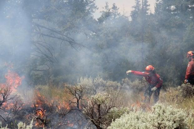 Members of the B.C. Wildfire Service conduct a controlled burn in 2021 to use up fuel like dry grass and pine needles and prevent future wildfires. (BC Wildfire Service/Twitter - image credit)