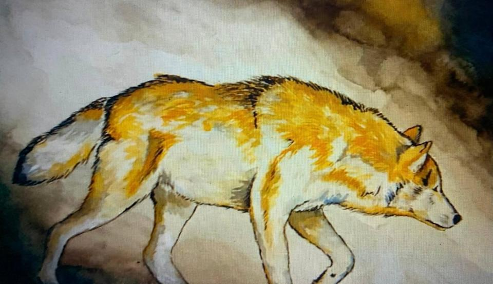 Olympic weightlifter Caine Wilkes also is an artist and created this watercolor painting of a wolf.