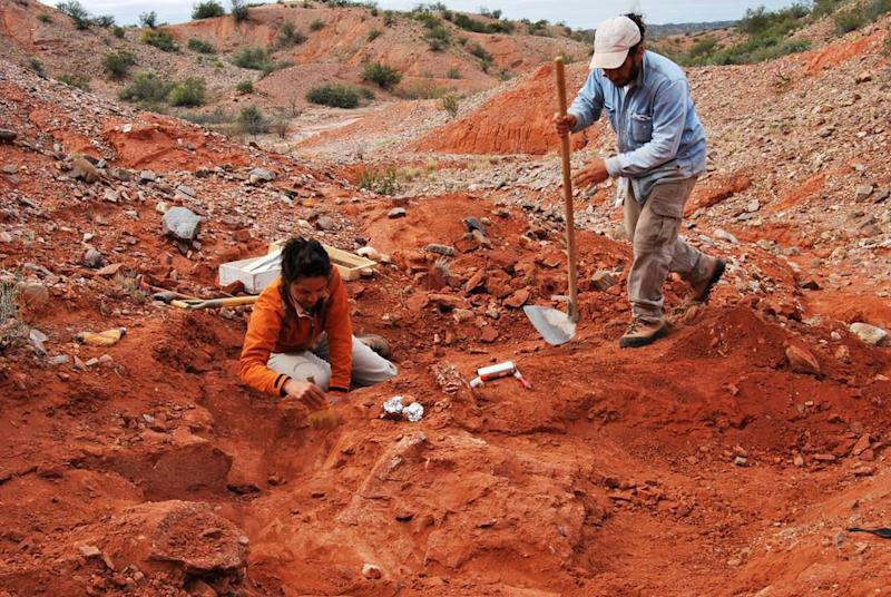 Fossil of first giant dinosaur discovered in Argentina