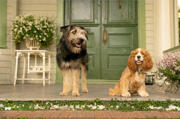 PHOTO: Disney releases new trailer for live-action Lady and the Tramp. (Walt Disney Studios)