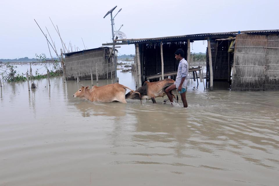 DARRANG,INDIA-JULY 21,2020:A villagers with his cattle wade through the flood water at Puthimari village in Darrang District of Assam ,India - PHOTOGRAPH BY Anuwar Ali Hazarika / Barcroft Studios / Future Publishing (Photo credit should read Anuwar Ali Hazarika/Barcroft Media via Getty Images)