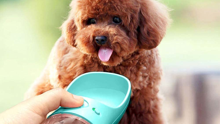 Keep your pets hydrated with this top-tier dog water bottle.