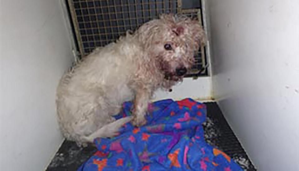 Max, a terrier, pictured bloodied and beaten.