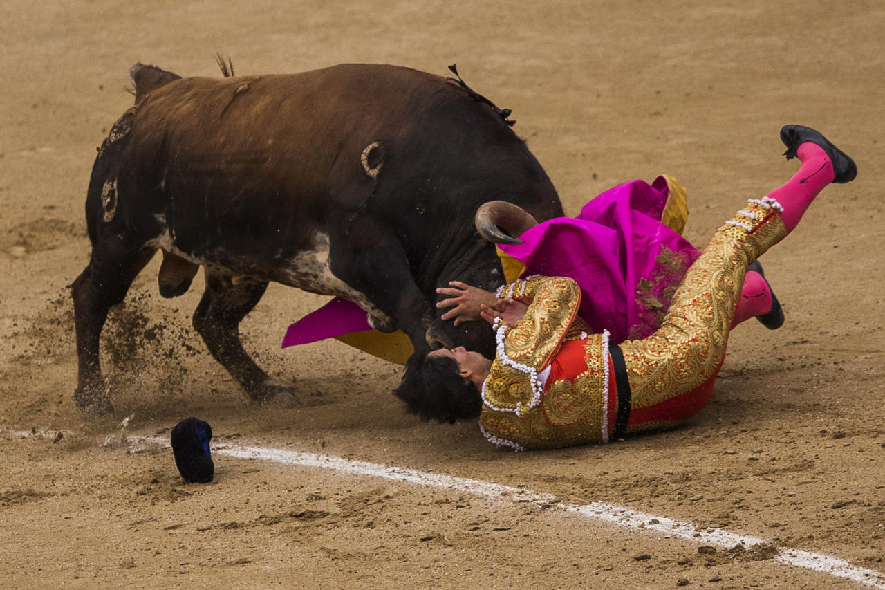 Spanish bullfighter Jimenez Fortes, is tossed by a Los Chospes ranch fighting bull during a bullfight at Las Ventas bullring in Madrid, Spain, Tuesday, May 20, 2014. Bullfighting is a traditional spectacle in Spain and the season runs from March to October. (AP Photo/Andres Kudacki)