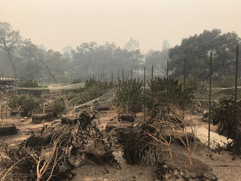 Pearson's 400-acre cannabis farm in Sonoma Valley sustained heavy damage.