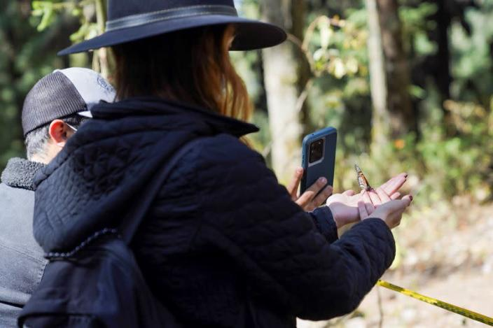 A tourist holds a monarch butterfly as other takes a picture at El Rosario sanctuary, in El Rosario