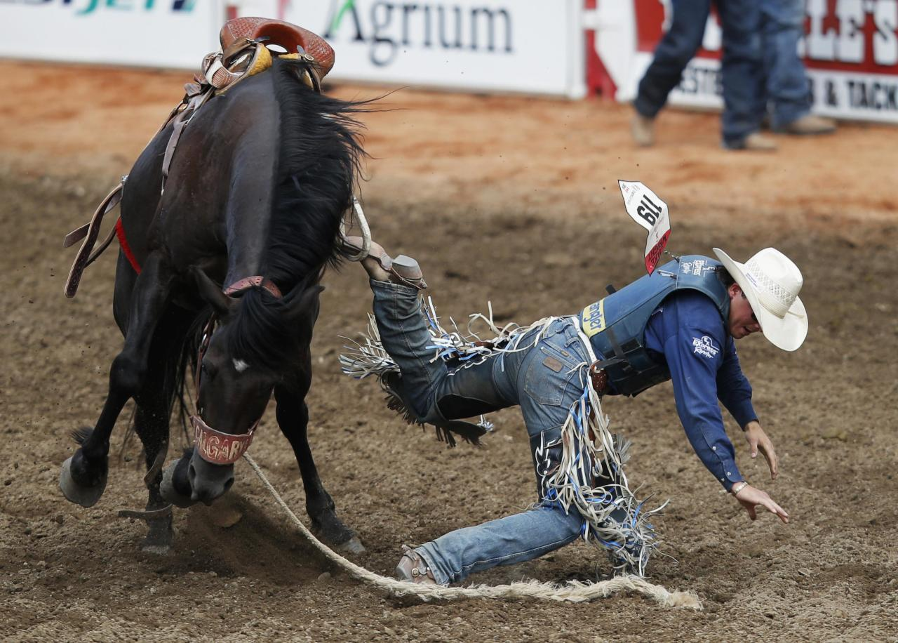 Ups And Downs Of The Calgary Stampede