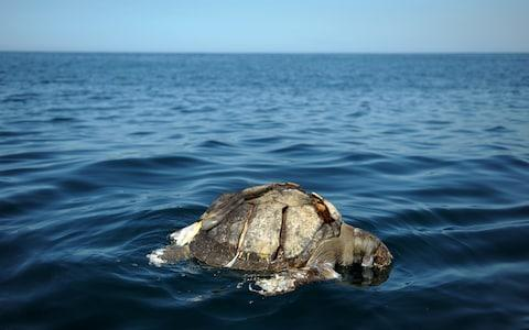 sea turtle  - Credit: AFP