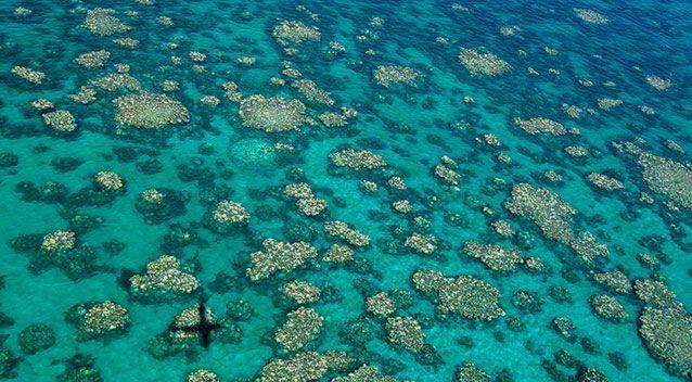 Back-to-back bleaching is killing huge tracts of the Great Barrier Reef, with almost none of the coral affected in 2016 expected to recover.