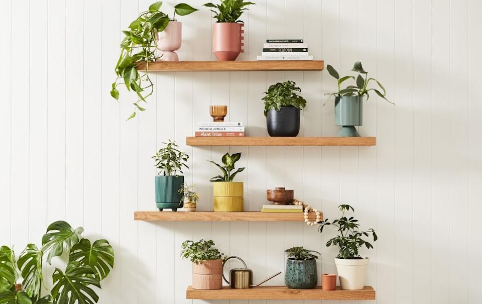 Bunnings has launched a huge new range of indoor plant pots with over 300 designs available! Source: Supplied.