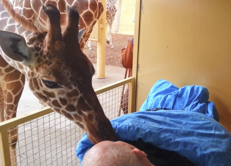 """This photo released Saturday March 22, 2014 by Stichting Ambulance Wens or Ambulance Wish Foundation shows a giraffe at Blijdorp Zoo in Rotterdam giving a lick to terminally ill Mario Eijs on Wednesday March 19, 2014 . The Stichting Ambulancewens """"Ambulance Wish Foundation"""" offers transport for terminally ill patients who cannot walk to help fulfill a last wish, in Eijs' case to be taken to the Blijdorp Zoo in Rotterdam where he worked doing odd jobs for 25 years. Eijs, who has a mental handicap, is dying of a brain tumor and has difficulty walking or speaking. (AP Photo/Stichting Ambulance Wens)"""