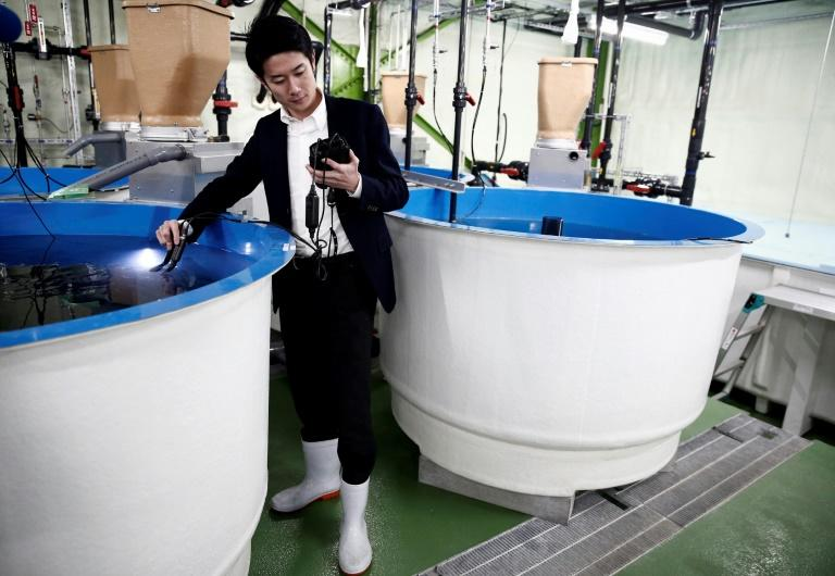 Tetsuro Sogo hopes Japan can one day overtake Norway as the biggest producer of salmon