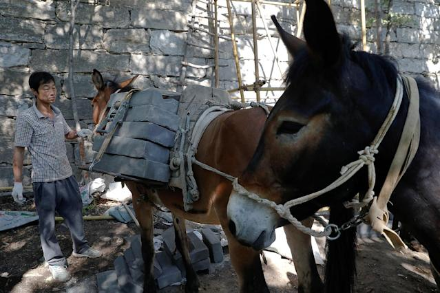 "<p>A worker unloads bricks from mules at the Jiankou section of the Great Wall, located in Huairou District, north of Beijing, China, June 7, 2017. ""The path is too steep and the mountains are too high, so bricks can only be transported by mules,"" said local mule owner Cao Xinhua. (Photo: Damir Sagolj/Reuters) </p>"