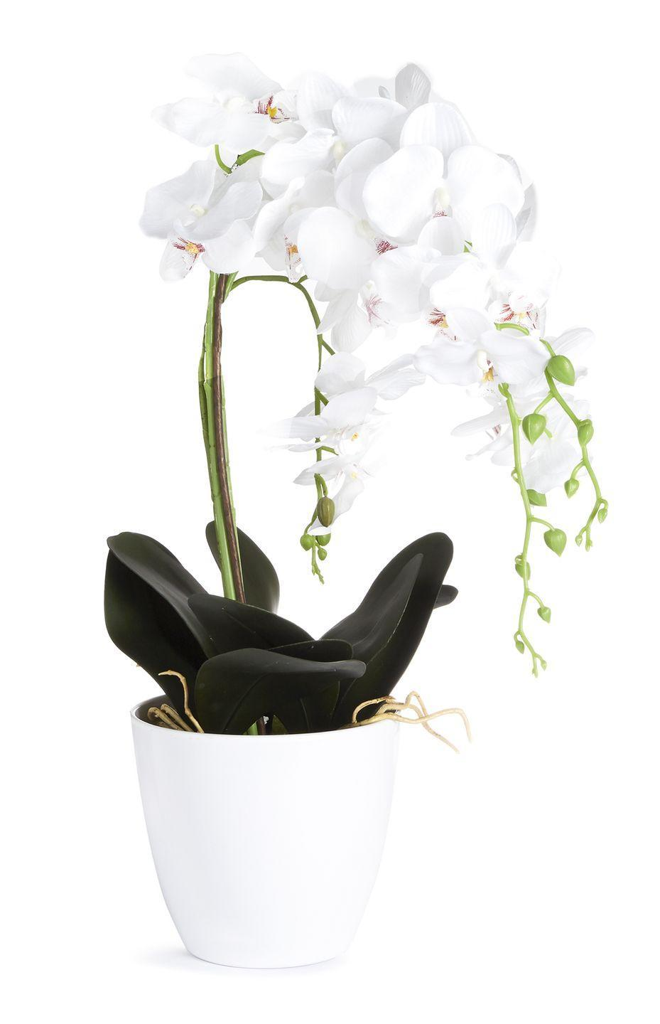 <p>Faux orchid plant in white pot, price unknown</p>