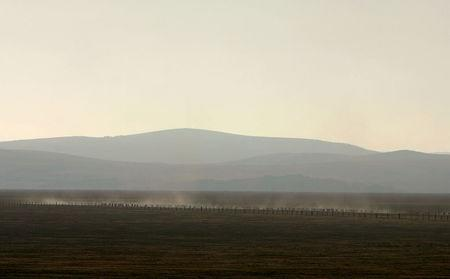 Sheep stir up dust as they move across the dried-up water basin known as Lake George, located 20 kilometres (8 miles) north-east of Canberra in this November 10, 2006 file photo.  REUTERS/David Gray/Files