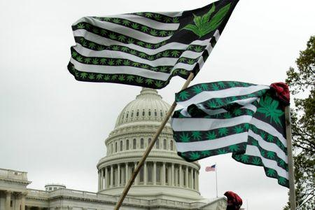 """FILE PHOTO - Marijuana flags are seen as protesters gather to smoke marijuana on steps of the U.S. Capitol to tell Congress to """"De-schedule Cannabis Now"""" in Washington, U.S. April 24, 2017. REUTERS/Yuri Gripas"""