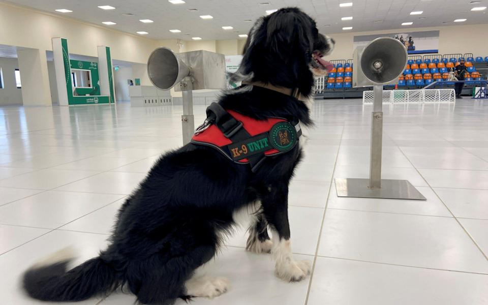 A dog that has been trained by Dubai Police K-9 unit to sniff out COVID-19 - ABDEL HADI RAMAHI/REUTERS