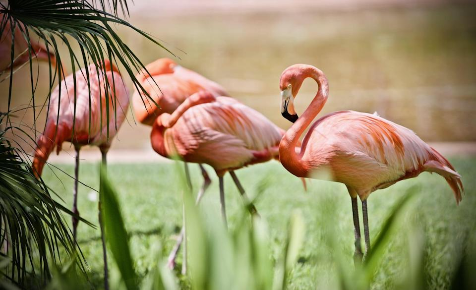 <p>The zoo can make for the perfect day out.</p>