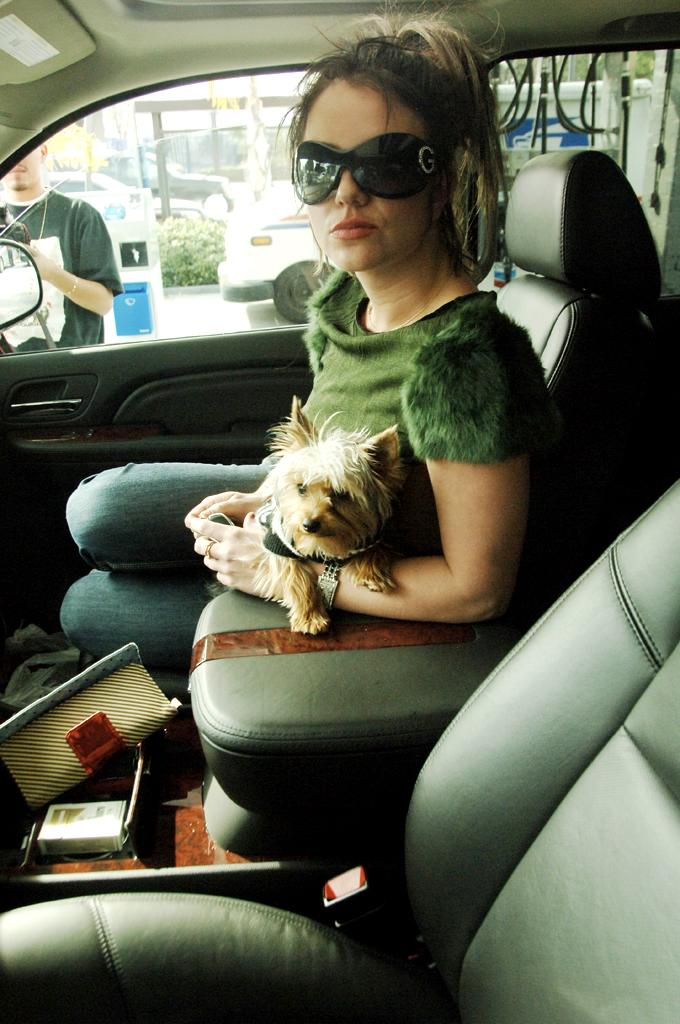 """As Britney was in the deep throes of her mental breakdown, her constant companion – besides the creepy Lutfi – was an adorable little Yorkie puppy named London. But she didn't always treat it like woman's best friend. In August 2007, just one month after she got it, the SPCA had to get involved after it was reported that the pooch had suffered a broken leg – and Britney had not provided proper medical care for the pup (she was later cleared of any wrong-doing). Britney's mother Lynne later claimed that Lutfi hid London in a closet at Britney's home and told her that he was missing … only to later """"find"""" the dog in order to win over the upset pop star. It's unclear if she still owns London (or any of the other dogs she had at the time) or if she found them new homes. Let's hope they are healthy and happy wherever they are!"""