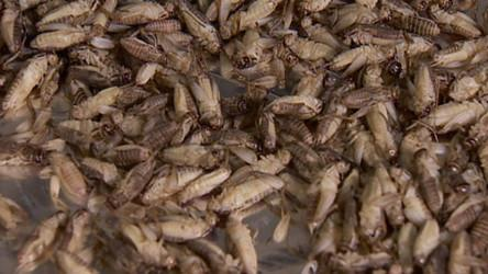 McGill students win $1M prize with idea to feed bugs to the world