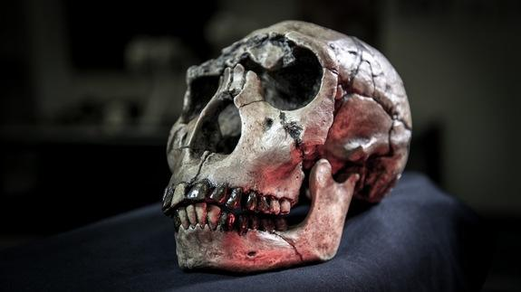 Food for Thought: Human Teeth Likely Shrank Due to Tool Use